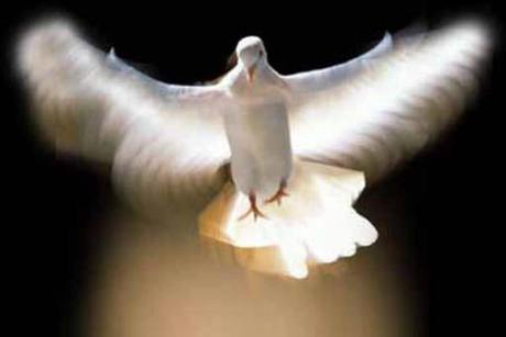 The Holy Spirt. The beautiful Dove of Heaven. Here to help us.