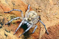Hi I'm Frank the rock spider. If you call me Frank Houston I won't answer. You see I've settled in here in Hades with all the other rock spiders and rock spirits. Life's good. We all think the same, think the same and act the same. A big happy family of Rock spiders.
