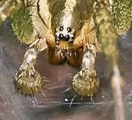 Rock spider. Jail name for pedophile. Origin: Western Australia jail slang.