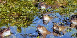 frogs 6